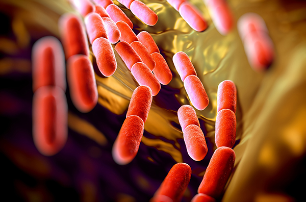 Many red Lactobacillus bacteria.