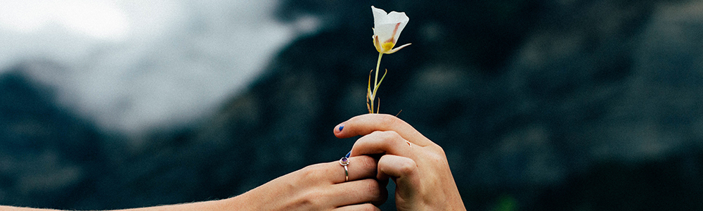 Two hands holding one white flower.
