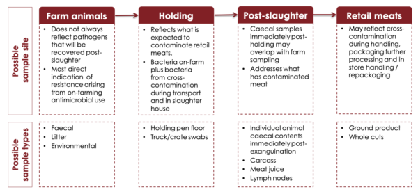 Flow chart of considerations for sampling through the food chain. Adapted from WHO/AGISAR, 2013 as explained in the text